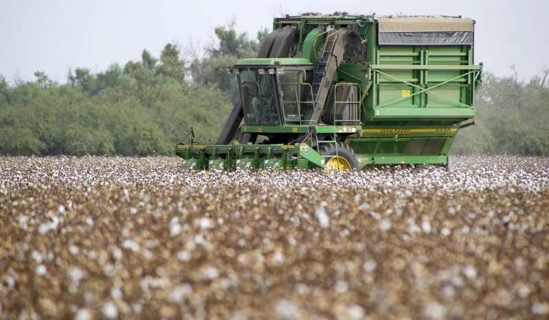 A large mechancical cotton harvester