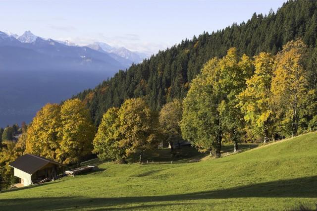 Switzerland - Autumn in Bernese Oberland
