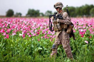 U.S. Marine patrols Opium field