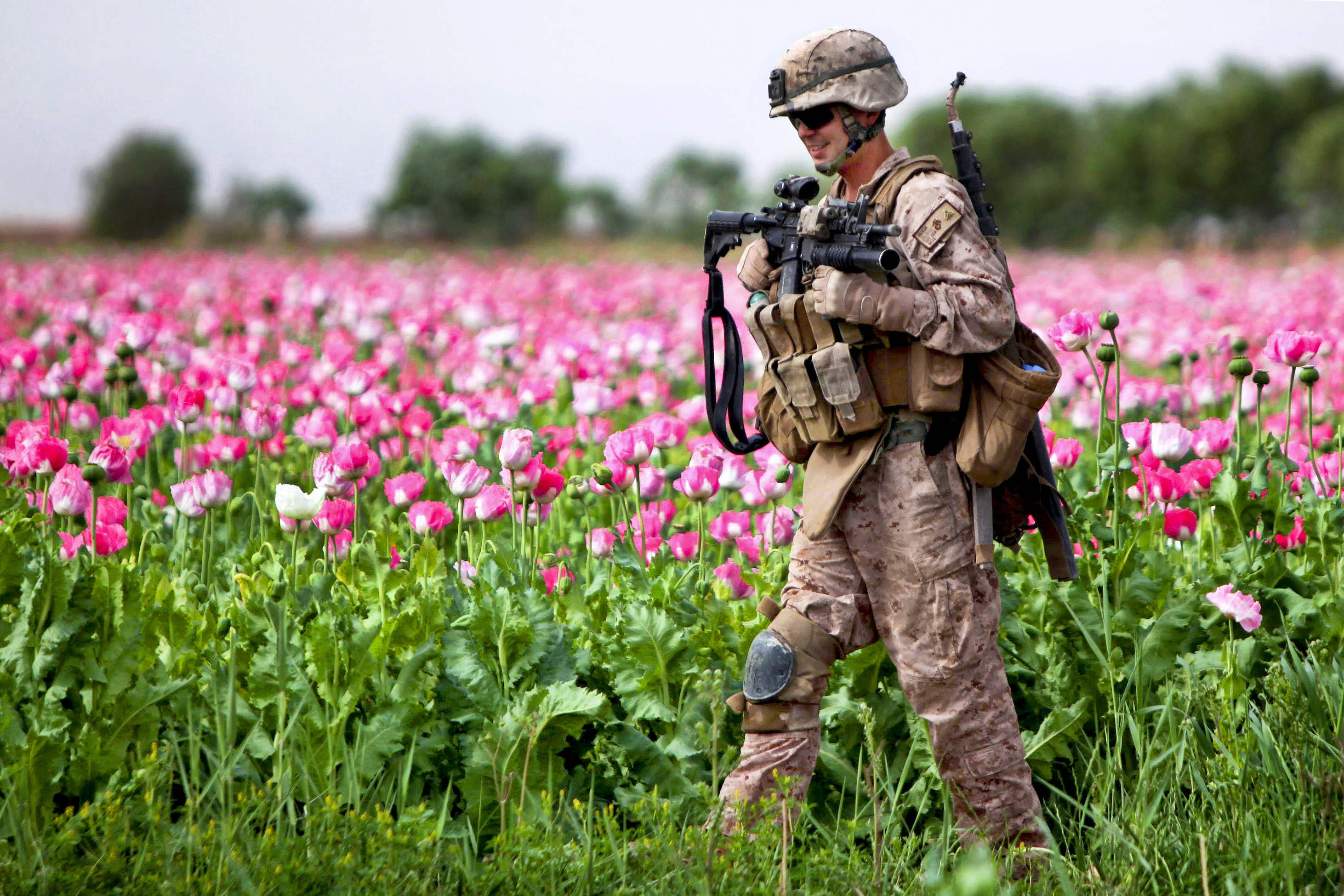 Image result for opium afghanistan