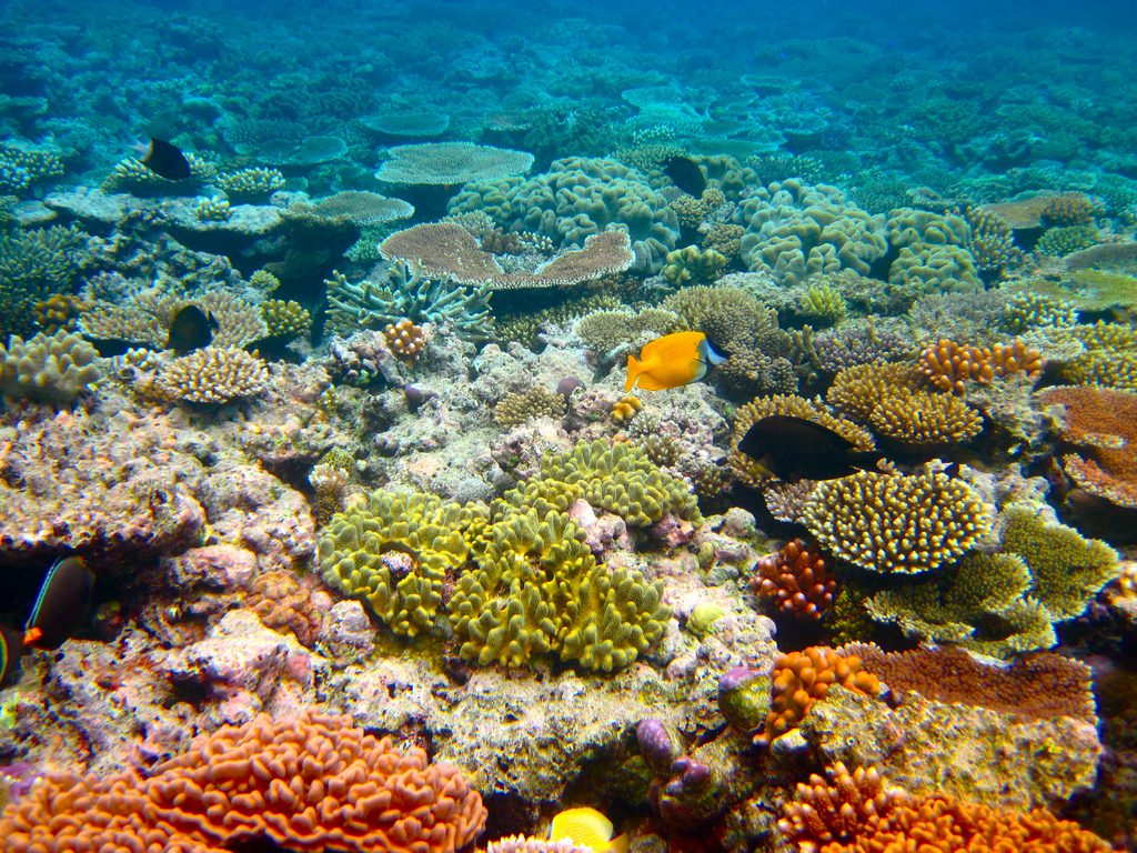 'Bandaid measure': Is $500m enough to save the Great Barrier Reef?
