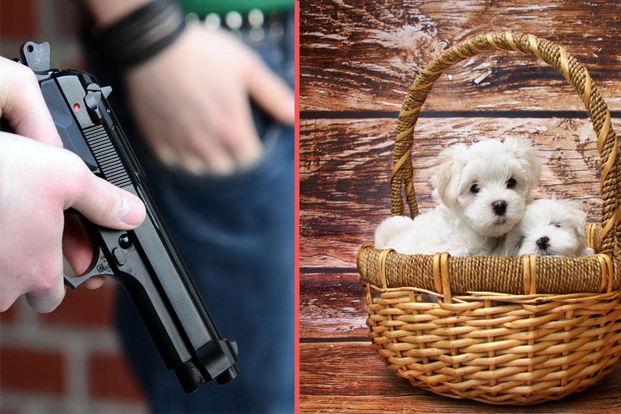 Puppiesvsguns