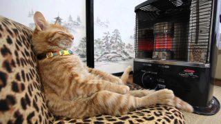 Cat-heater