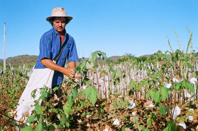 brazil farmer