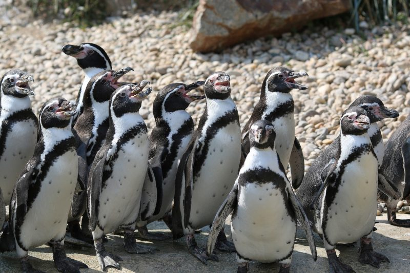 penguin-2549842_1920