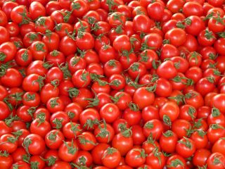 tomatoes-73913_1920