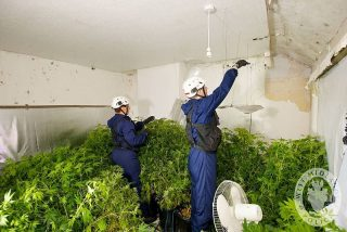 800px-Day_125_-_West_Midlands_Police_-_Cannabis_Disposal_Team_-_Drugs_Warrant_(6995870022)