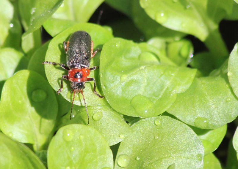 beetle-2300571_1920