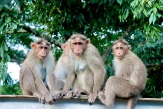 group-of-monkeys-all-monkeys-looking-on-camera-perfect-photo-of-group-monkeys_t20_nLXYA6